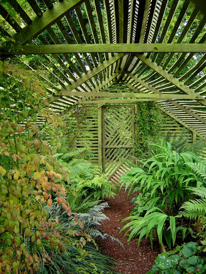 Economical way to build a space with privacy and filtered light moss covered lath house - House plants that like shade ...
