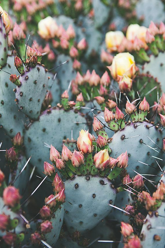 TITLE: Prickly Pear DESCRIPTION: Pretty pastel prickly pear cactus. :) Printed without watermark on Lustre Paper by a Professional Lab  #2020AVExFESTIVAL