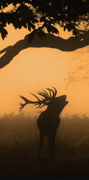 R U S T I C ✜ comfort ~ call of the wild