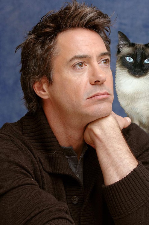 Robert Downey Jr and a cat. Your argument is invalid