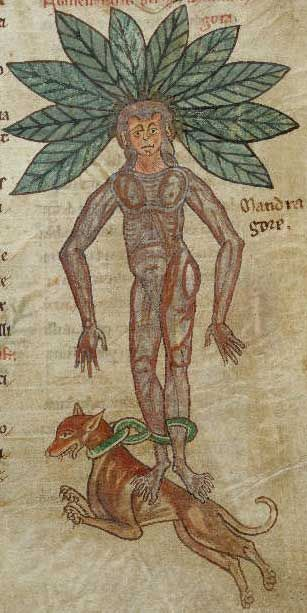 Mandrake:  A plant with human-shaped roots, that shrieks when it is pulled from the earth    British Library, Harley MS 1585, Folio 57r