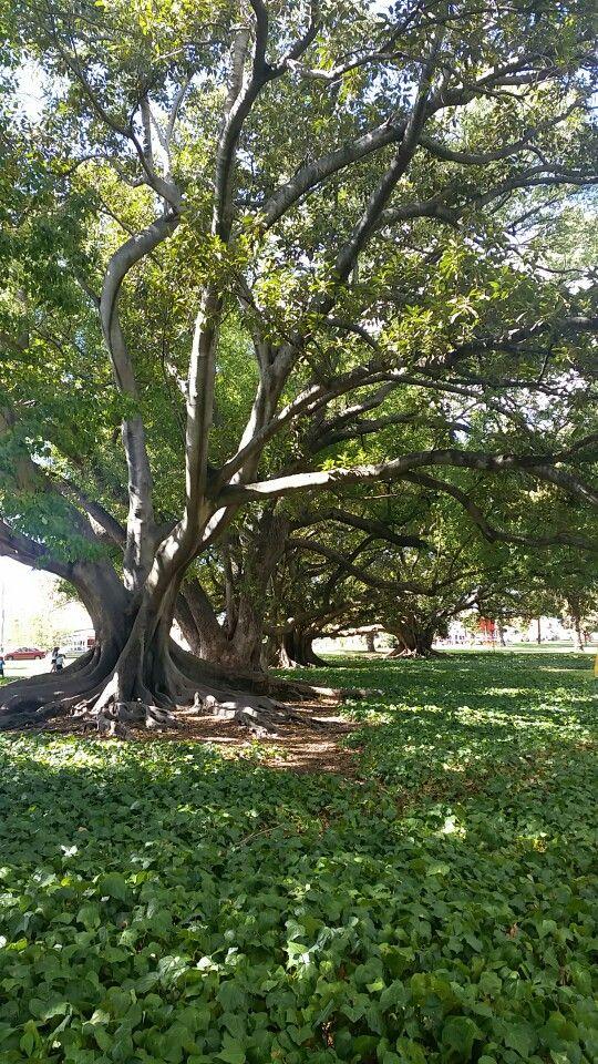 Hyde Park in Perth, Western Australia