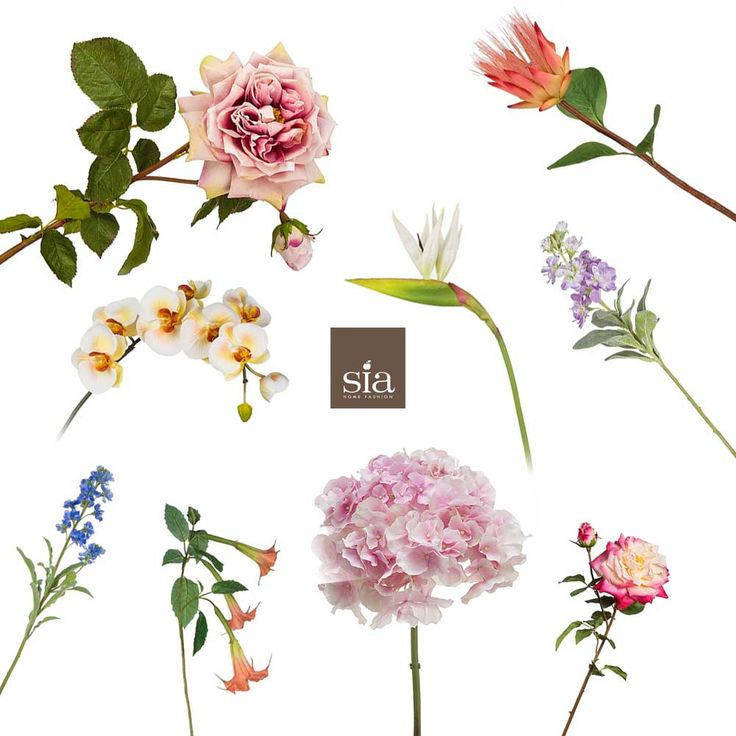 Shop our edit of seasonal blooms to adorn your house this July #artificialflowers https://www.pavilionbroadway.co.uk/artificial-flowers/artificial-flower-stems/seasonal-artificial-flowers.html…