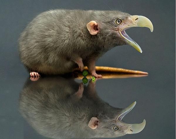 .: Computers Graphics, Weird Funny, 07 Ragl, Humandesc Com, Rats Birds, Rats Nests, Funny Photos, Photoshop Hybrid, Inspiration Creatures