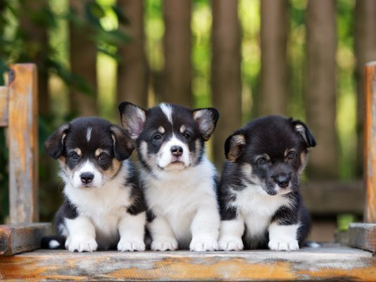 National Puppy Day: Here are some pictures of cute puppies
