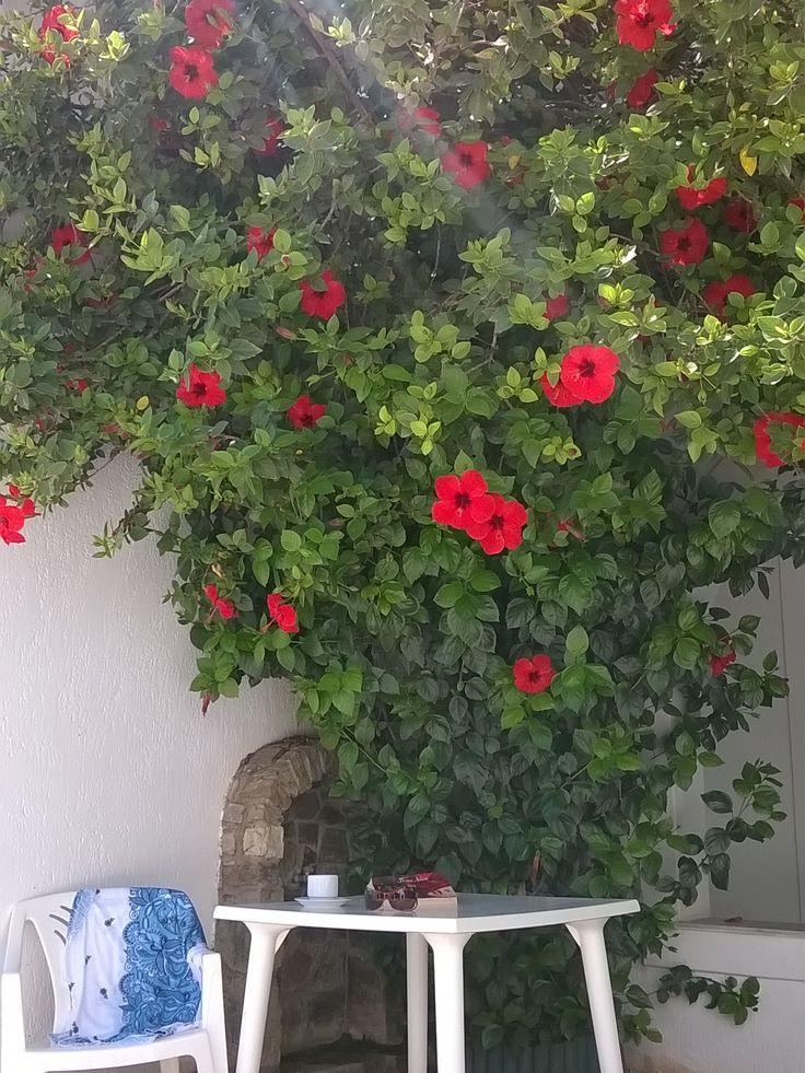 #Summer #summervacation #greece #greekisland #sea #vacations #greece #paros