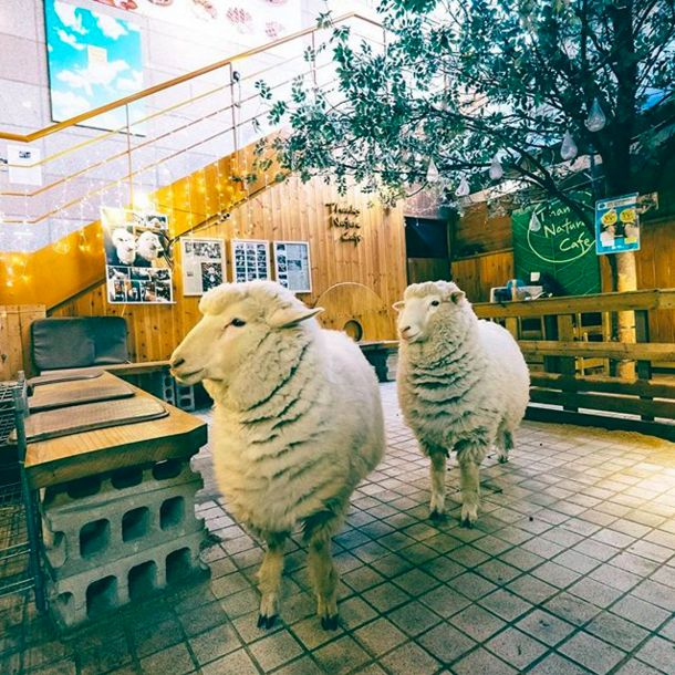 Thanks Nature Café, Seoul, Korea | 13 Animal Cafés Every Animal Lover Will Want To Go To