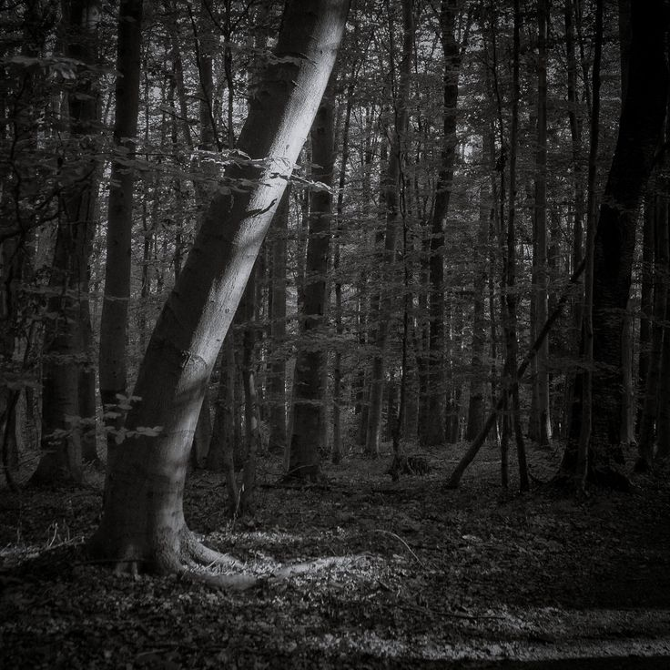 bwstock.photography  //  #beech #forest