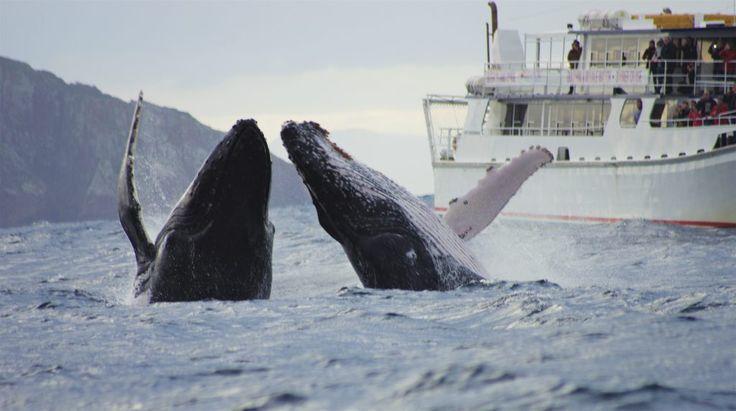 Moonshadow TQC Whale Watch Cruises