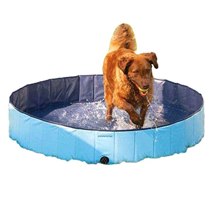 Splash About Dog Swimming Pool Dog Swim Dog Play Yard Dog Pool New Small Pool #CoolPup
