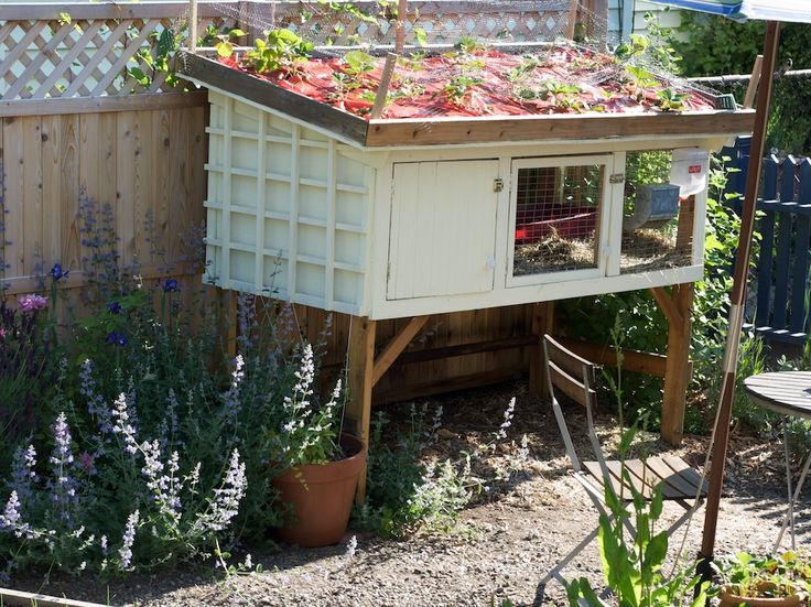 rabbit hutch green roof for growing strawberries use a