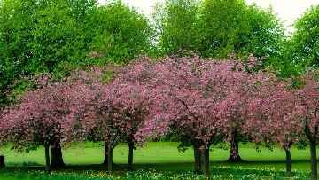 """Short Essay on my favourite season the """"Spring Season"""". Being born in India is a huge advantage when it comes to seasons. The country"""