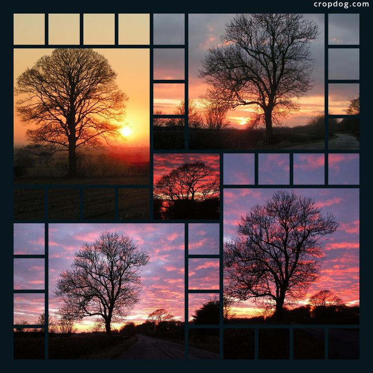 Trees right on our doorstep - I love trees and I love sunsets.