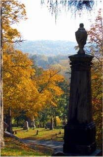 Albany Rural