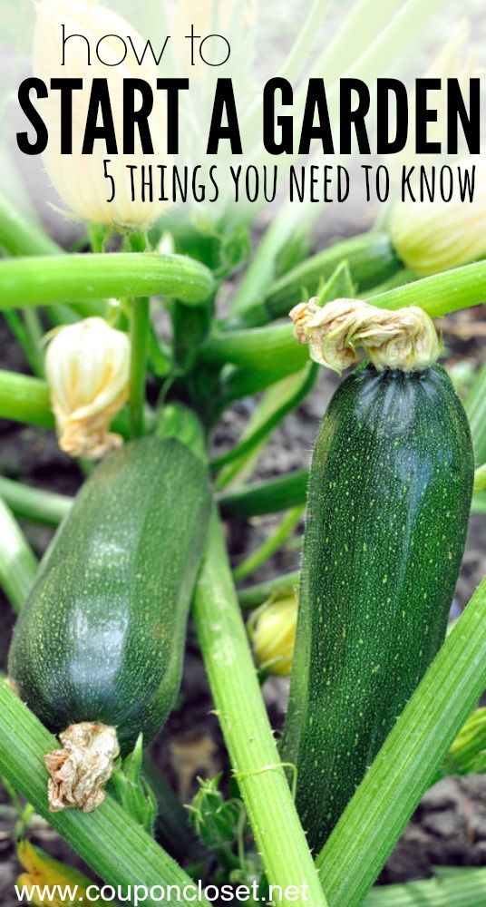 Are you starting a vegetable garden. Learn how to start a garden and the 5 top things you need to know before you start one.