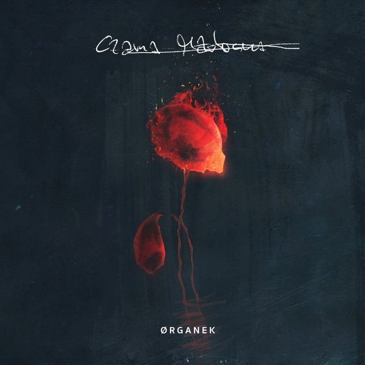 organek czarna madonna full album - Szukaj w Google