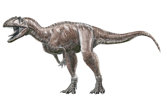 32 best dinosauricon m megalosauridae images on