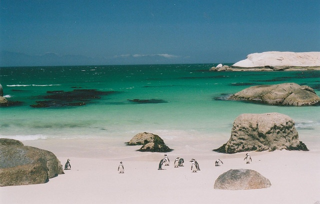Boulder beach, Zuid-Afrika