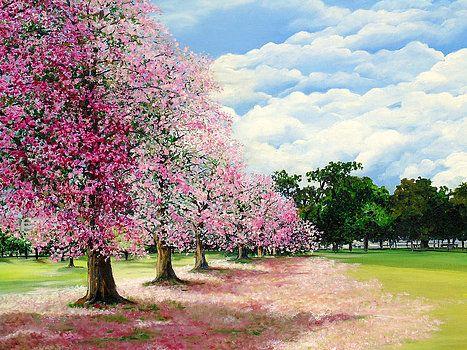 Pink Savannah Poui By Karin Dawn Kelshall Best