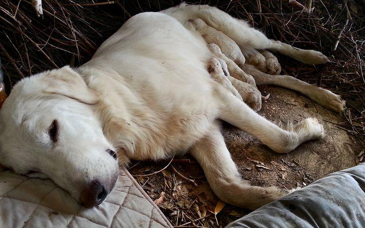 mamma Bianca e la sua seconda cucciolata salvata dalla casetta gialla