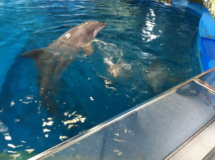 Barcelona Zoo dolphin
