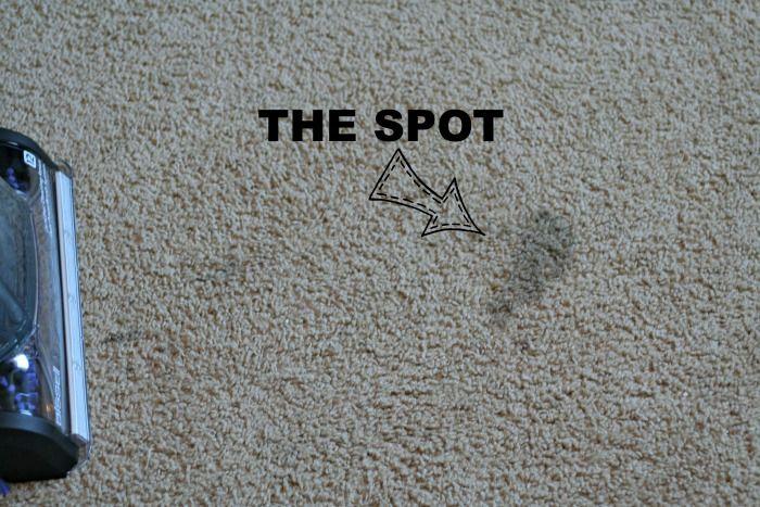"""SPOT, """"The Best Ever Homemade carpet cleaner"""""""