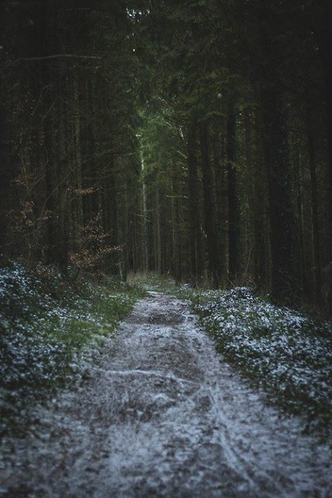 A light dusting of snow along a wooded dirt road.