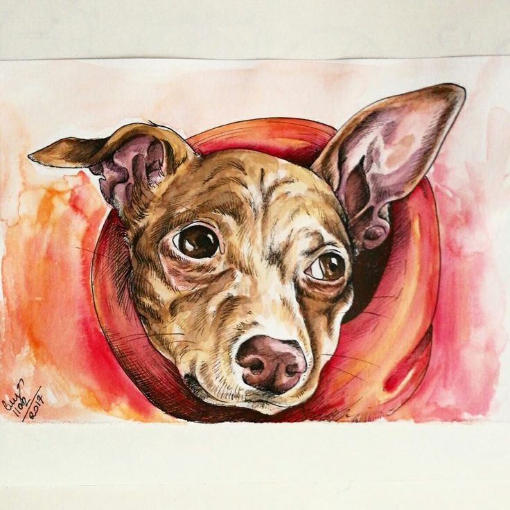 Tina the dog drawing, watercolor and micron by Magdalena Leszczyniak