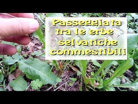 Video guida: le erbe selvatiche commestibili di marzo - YouTube