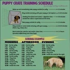 Dog Training Jacket Dog Training 1 Year Old 3 Dog Training