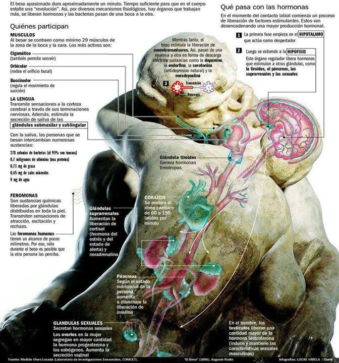 22 best Fisiologia images on Pinterest   Human body, Medicine and ...