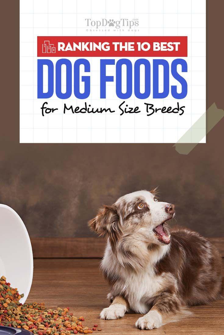 The 10 Best Dog Foods For Medium Size Breeds Best Dog Food Best Dry Dog Food Dog Breeds Medium