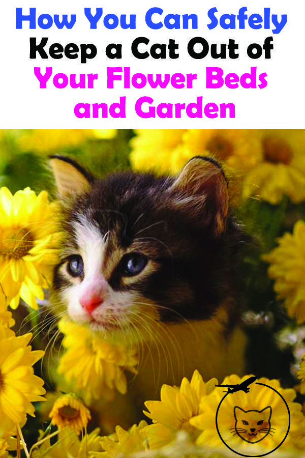 How To Keep Cats Out Of Flower Beds High Volume Ultrasonic Devices Are Another Interesting Way To Keep Cats Out Of Your Cat Repellant Outdoor Cats Flower Beds