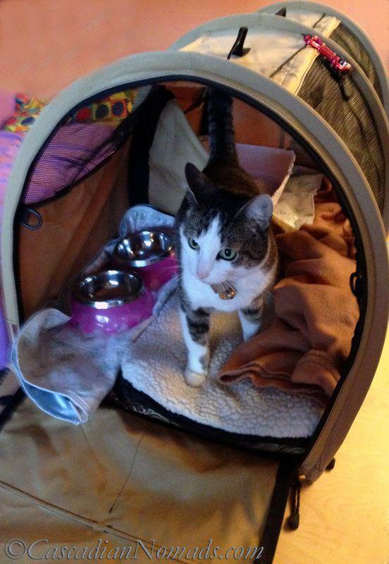 best 25 cat carrier ideas on pinterest buy a kitten. Black Bedroom Furniture Sets. Home Design Ideas