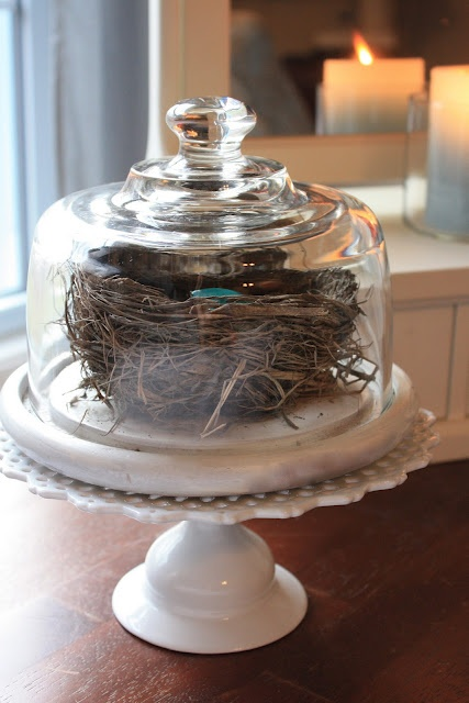 Spring~ Birds nest inside a cheese dome.