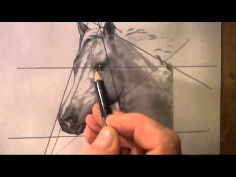 Tekenen met Lineke Lijn - Paard
