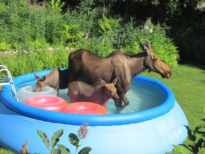"""""""Typical day in Vermont...""""(uh,someone else said tha                                                              t.I live in Vt.& would so love to see that.Though I did see a moose  on my walks last wk."""