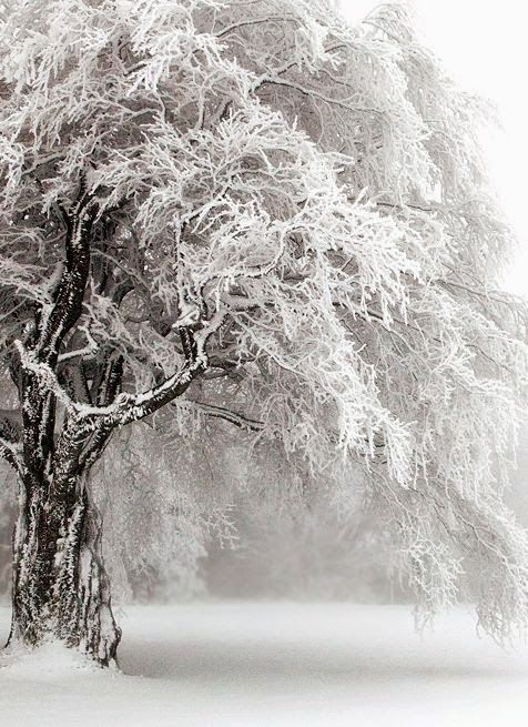 Winter trees ~ Dreamy Nature