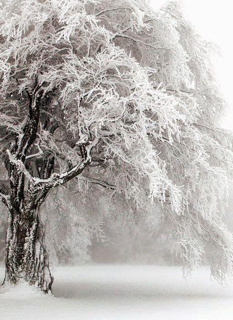 """""""Après tout ce blanc, vient le vert, Le printemps vient après l'hiver, Et après la pluie le beau temps.""""  Claude Roy"""
