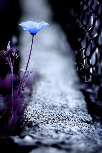 """""""Si la vie n'est qu'un passage, sur ce passage au moins semons des fleurs."""" (Montaigne)"""