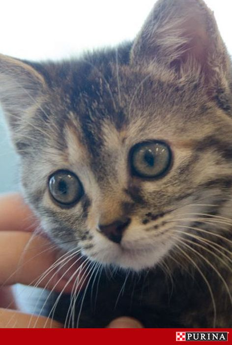 Adopting a new kitten? Expect lots of playful activity and be sure to have safe kitten toys that can't be shredded, shattered or swallowed. Check out more kitten care tips here!