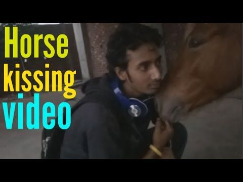 Horse kissing his master   horse funny kiss video   funny horse video Co...