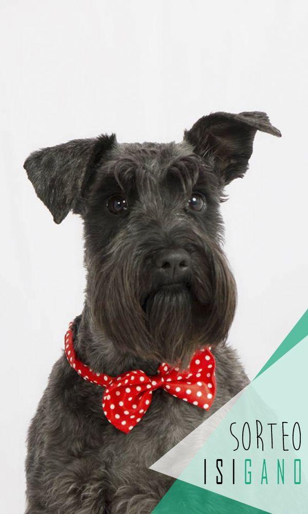InterZoo Herrera Oria quiere premiaros con un Arnés Curli (Protector de cabeza y nuca, con intercambiador de calor, y con dogfinder) hasta perros de 12-16kg, o Curli Belka para perros grandes hasta 30-45kg + Manta Refrigerante valorado en hasta 60€, el regalo lo eliges tú! #sorteo #gratis #sorteosgratis #sorteosmadrid #Madrid #suerte #luck #goodluck #premio #free #regalo #concurso #mascotas #pets #Alcobendas #Fuencarral