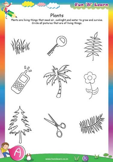 plants - worksheets for lkg kids