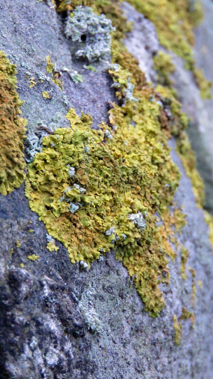 Lichen on stone wall