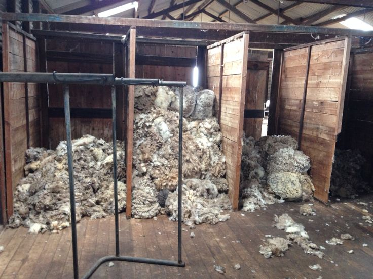 Wool in the shearing sheds.