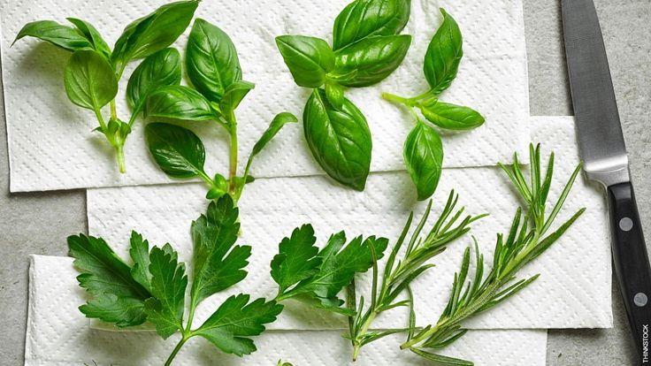 Ervas aromáticas: onde usá-las na cozinha?