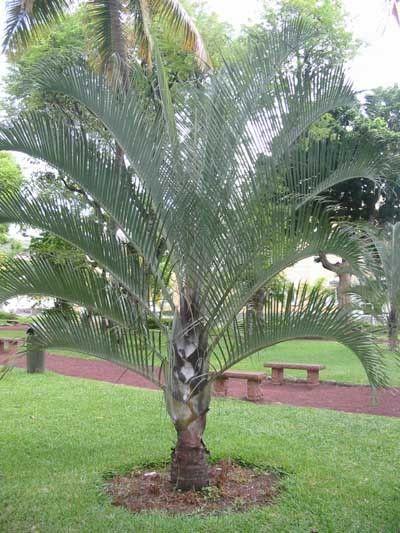 Florida Garden Ideas Tropical Landscaping