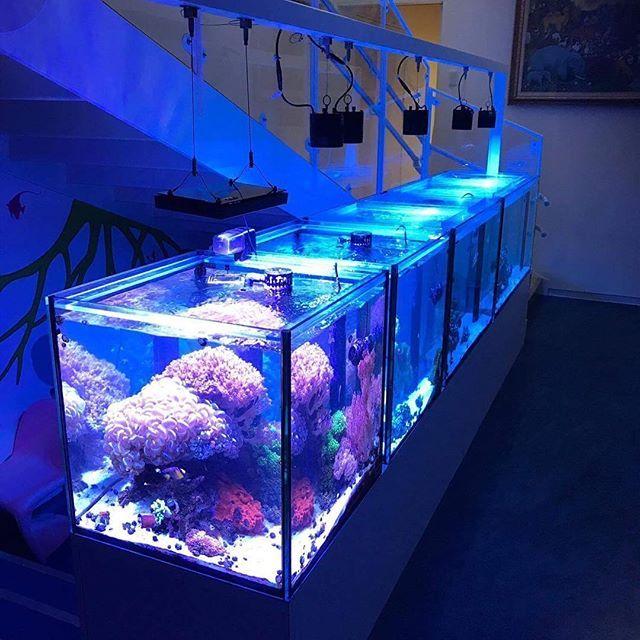 【cotup】さんのInstagramをピンしています。 《a.m.p aquarium tank 1200x600x600 OF 900x600x600 OF 600x600x600 OF 2台 Neon Wave 様(福岡県) #アクアリウム #ガラス水槽 #amp #オーバーフロー #オーダーメイド #海水魚 #サンゴ #コットアップ #水槽 #インテリア #ミドリイシ #水族館 #大型水槽 #海水水槽 #マメスナ #イソギンチャク #neowave #sps #海水魚水槽 #水草水槽 #レイアウト水槽 #魚 #熱帯魚 #coraltank #reeftank #リーフタンク #テラリウム #ビバリウム》