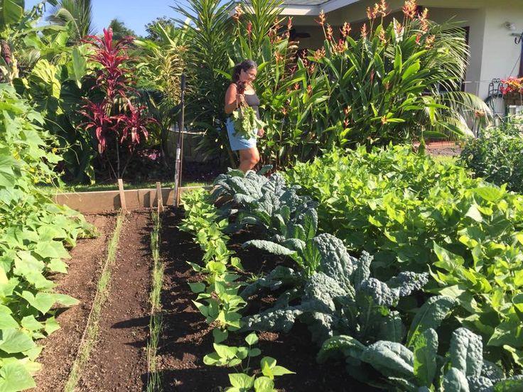 Superieur Hawaii, Vegetables Garden, Vegetable Gardening, Gardens, Vegetable Garden,  Outdoor Gardens, Garden, Hawaiian Islands, House Gardens